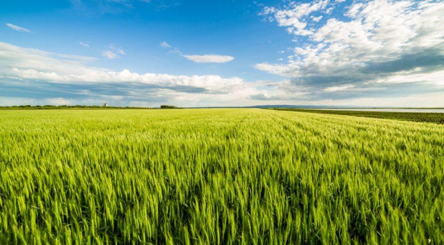 Fertilización del cultivo del cereal de invierno con fertilizantes líquidos inhibidos (Tecnología Neolent)