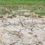 ¿Cómo combatir los problemas de salinidad de su cultivo?